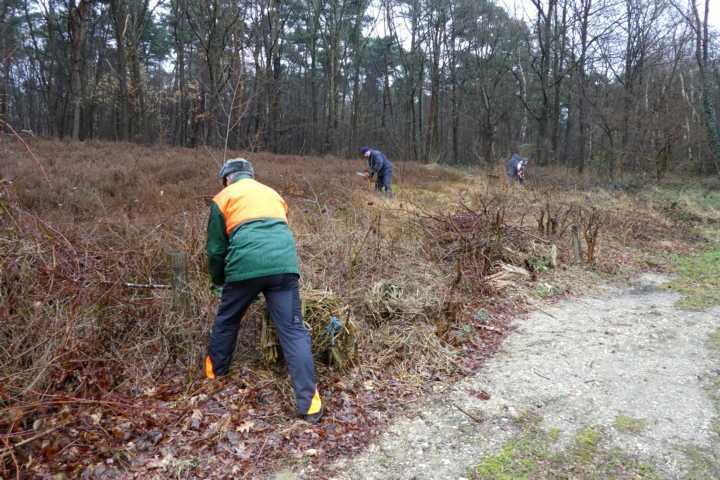 anderer Schwerpunkt: Pflege von Heideflächen