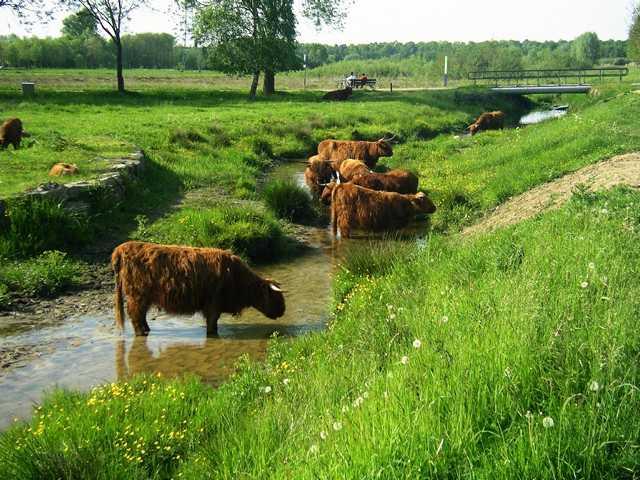 der sog. Rode Beek kommt aus der Brunssumer Heide (Nl), hier kurz vor Eintritt in den Natur- und Landschaftspark Rodebach(Rode Beek in Schinveld