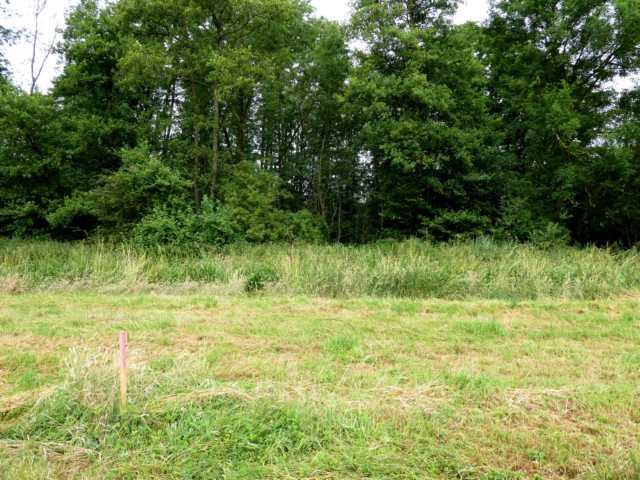 sollte ein neuer, mäandrierender Rode Beek durch dieses Waldstück geführt werden