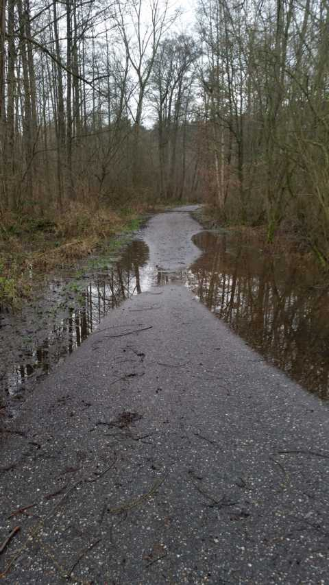 rtüsten sich zurzeit Anwohner von Rhein, Mosel, Maas ... vor drohendem Hochweasser, kann sich der Rodebach frei ausdehnen: rechts bedingt durch die Hanglage zum Wildpark hin,