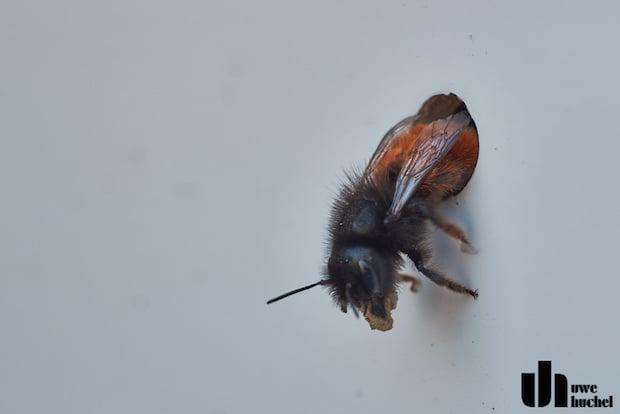 was k nnen wir gegen das bienen und insektensterben tun nabu selfkant e v. Black Bedroom Furniture Sets. Home Design Ideas