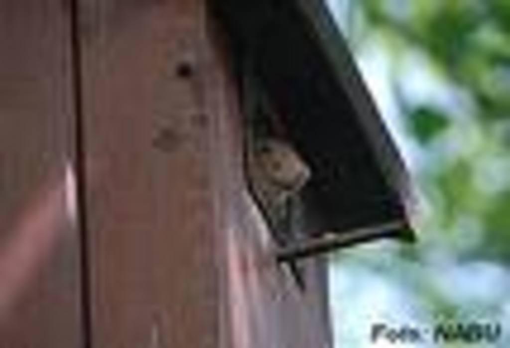 Ein Eichhörnchen hat es sich in einem Nistkasten gemütlich gemacht! Quelle. www.mecklenburg-vorpommern-nabu.de