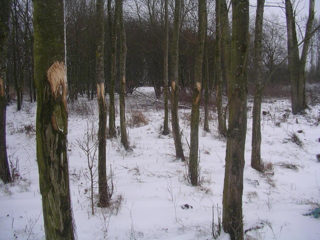 Rückkehr des Holzfällers? In der Höhe sind seine Spuren erst recht nicht möglich. Im Naturr- u. Ladschaftspark Rodebach/Rode Beek sind andere Bewohnen auf der Suche nach dieser Mineralienquelle !