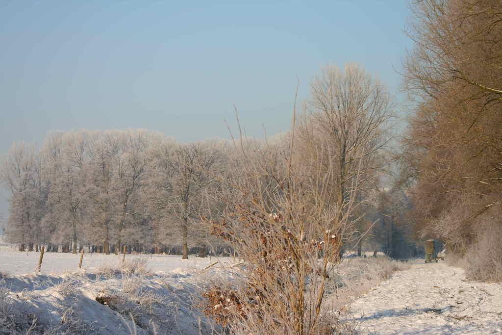 Winter am Rodebach in Süsterseel