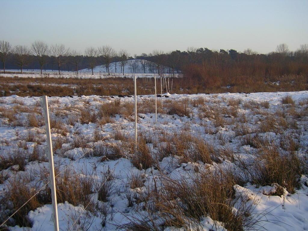 """seitdem vor einigen Wochen im sog. """"Schinveldse Es"""" (Natuur- u. Landschaftspark R./R.) ein flexibler Zaun gezogen und  die Räume der Hochlandrinder somit teils gelenkt bzw. kanalisiert"""" worden sind, sind auch ganz neue Spuren zu beobachten"""