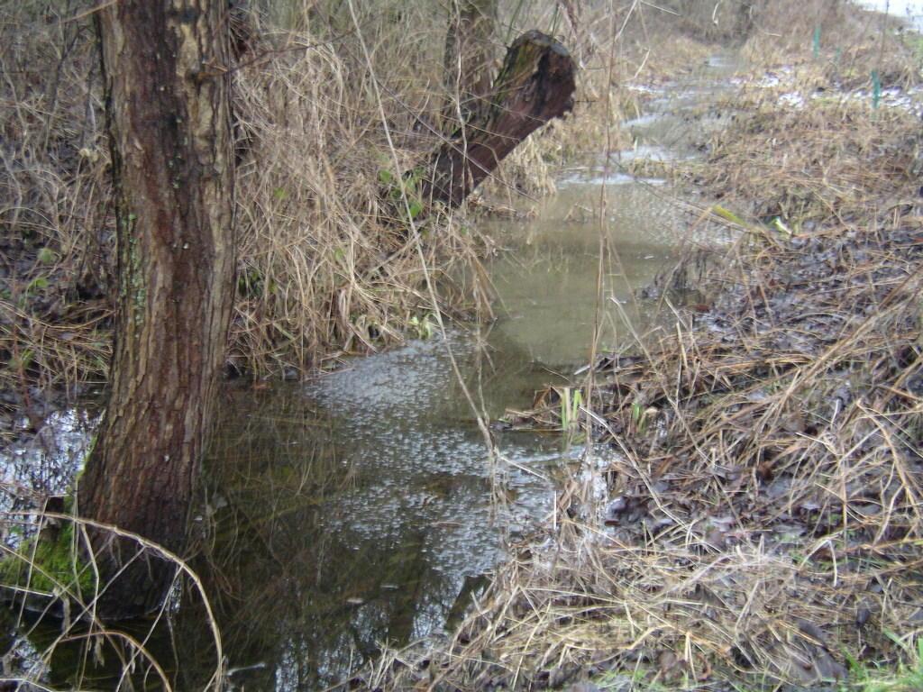 """... Wasser - Gräben zum Überlaufen (""""Biotop an der Dahlmühle"""")"""