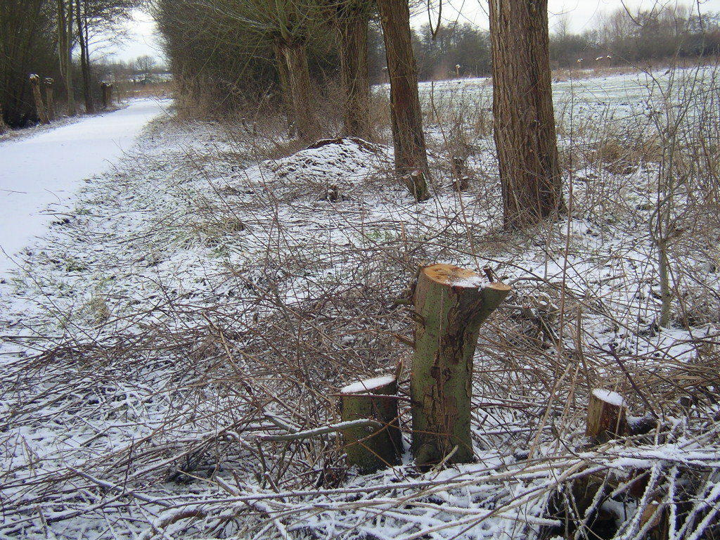 Weiden - Schlehen  -  Weißdorn ...