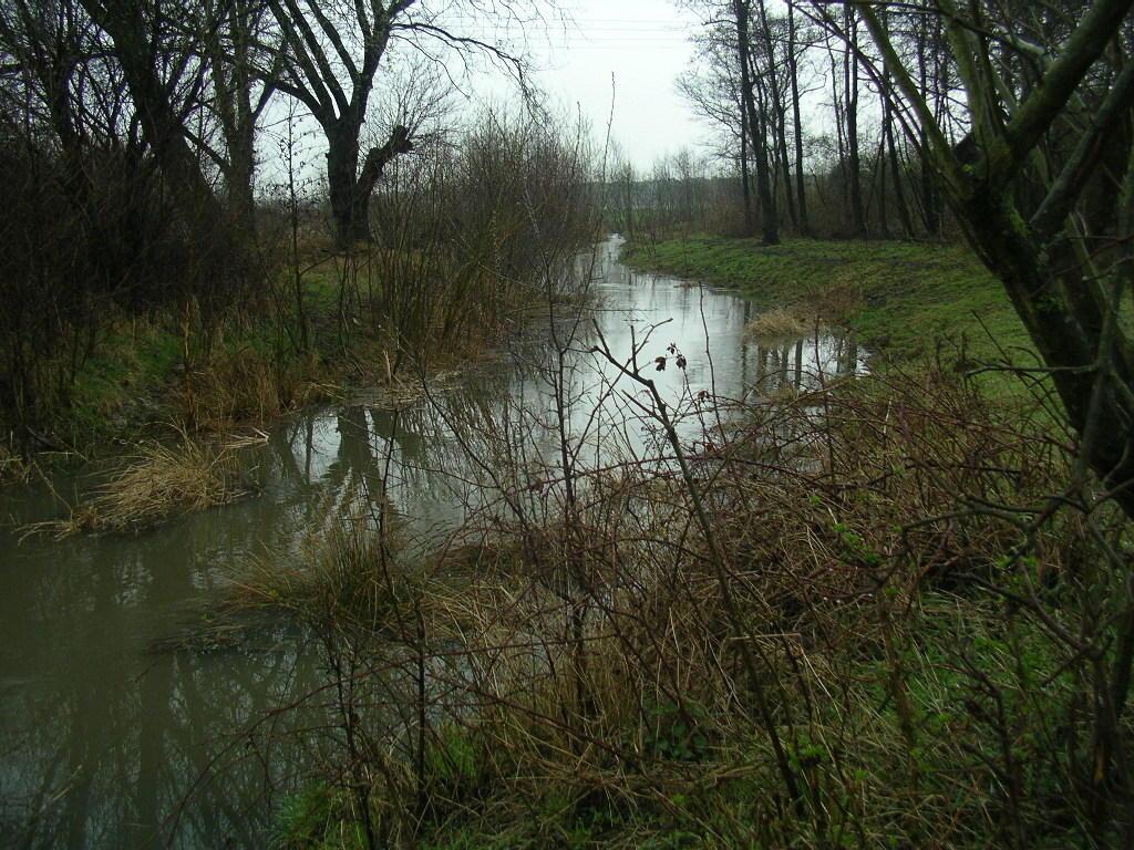 auch im geplanten neuen Biber-Lebensraum ausreichend Wasser