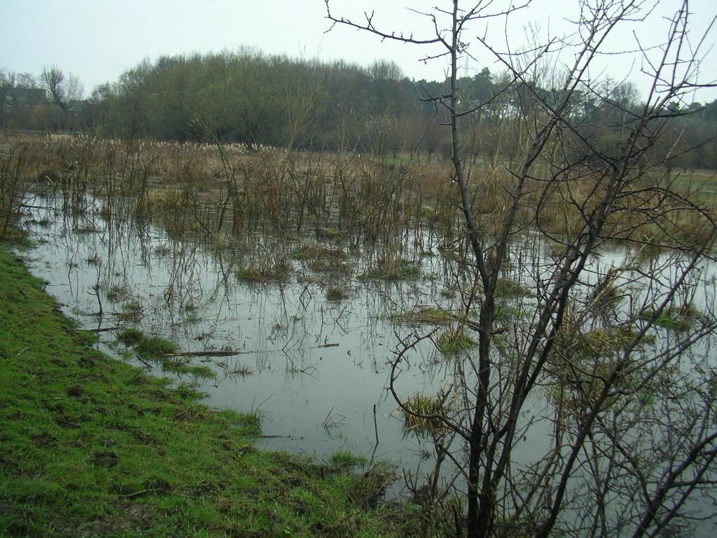 das neue Paradies für Amphibien, Wasservögel, Wasser pflanzen rd. 5 Jahr nach Umsetzung der Renaturierungsmaßnahmen Rode Beek/Rodebach !
