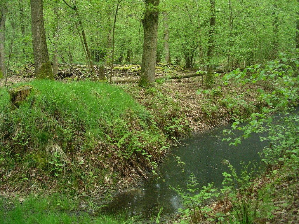Wassergraben vor erhöht liegendem Innenbereich (wo das Bauernhaus zu vermuten war)
