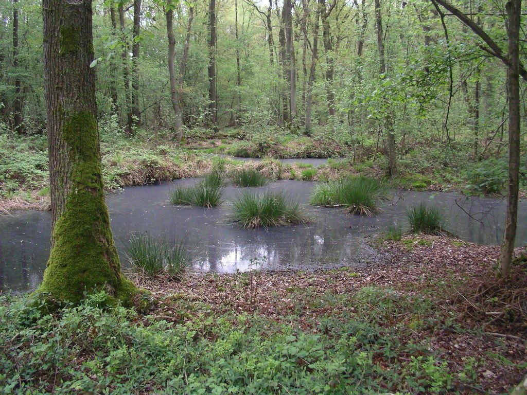 Ihr Standort im Moor- und Sumpfgelände erhöhte noch die Sicherheit. Außerdem ist davon auszugehen, dass die Umgebung baumlos und dadiurch weit übersichtlich war.