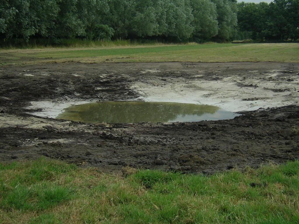 Erfreulicherweise konnten in diesem Jahr neue Fläche aus der intensiven Nutzung herausgenommen werden (hier südöstlich des Kahnweihers in Gangelt) -ökologisch aufgewertet durch die zusätzliche Schaffung von Wasserflächen, die sich schon nach 1 Tag mit Wasser füllten