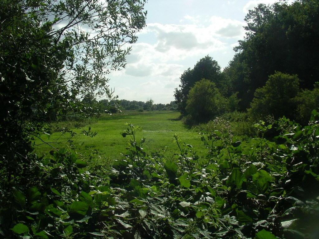 von der Dahlmühle aus geseghen (links im Foto ist der Bereich zu erkennen, der bewusst von jeder Mahd oder Beweidung ausgeschlossen bleibt)