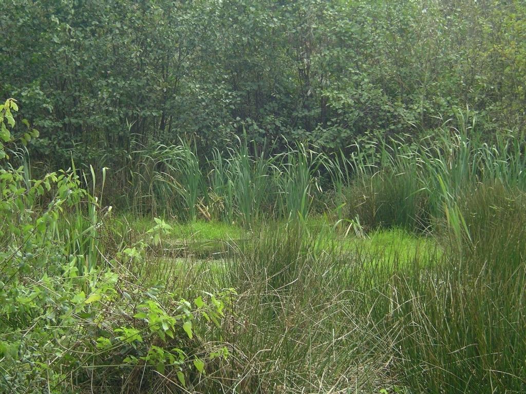 """ein ganz nett harter Brocken für den Anfang (kann nur ermessen, wer sich an den ersten Frühjahrsarbeitstag im häuslichen Garten erinnert): Pflege eines unserer 4 Feuchtbiotope - Biotop """"Am Wildpark"""""""