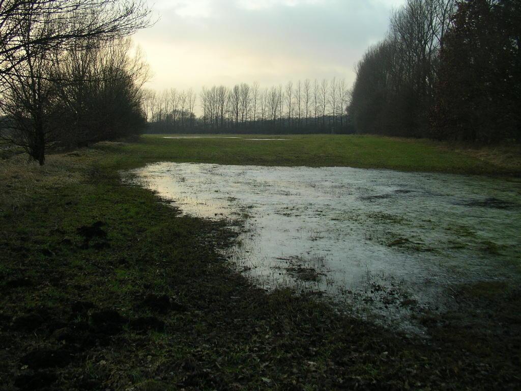Blänken sind Tümpel, flache natürliche Wasseransammlungen, meistens durch Stau-, Grund- oder Schichtenwässer gespeist.