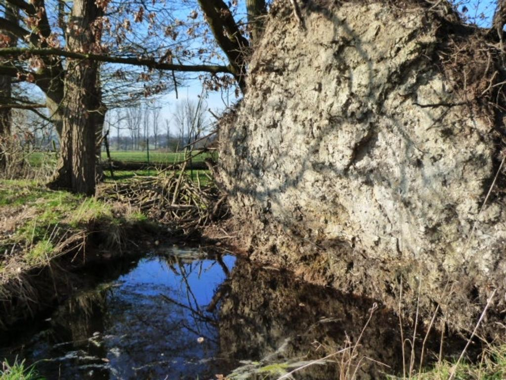 ... für andere Leben (Amphibien, Libellen, Wasserinsekten ..., u.U. bis hin zur Bruthöhle für den Eisvogel!?)
