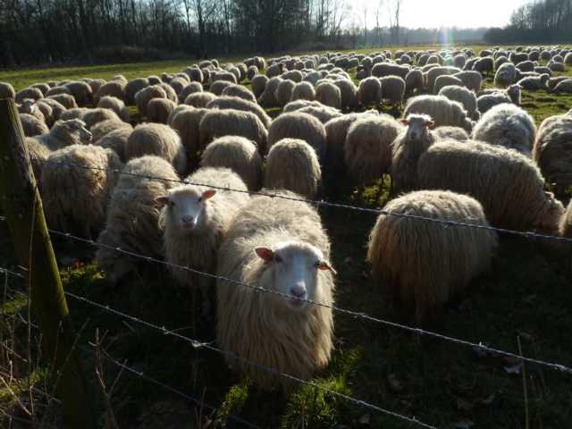 erste Vorgespäche mit dem Besitzer der Herde(n), Herrn Eikermann/Hohenbusch, sowie Natuurmonumnmetn klingen optimistisch