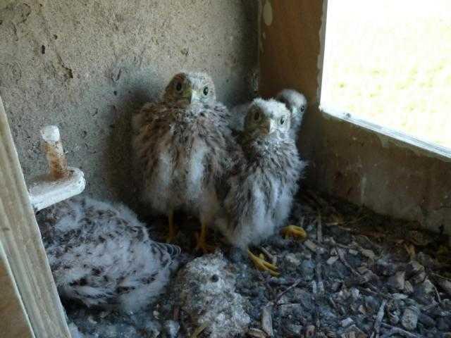 im ersten Jahr / nach wenigen Monaten: aus 5 Eiern 4 neugierige Tufa-Junge erfolgreich ausgebrütet