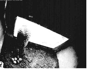 wünscht der NAU RSK (bald NABU Selfkant): In diesem Jahr hat der Osterhase sich veriirt und schickt Grüße aus dem Tufa-Nistkasten an der Breberener Mühle