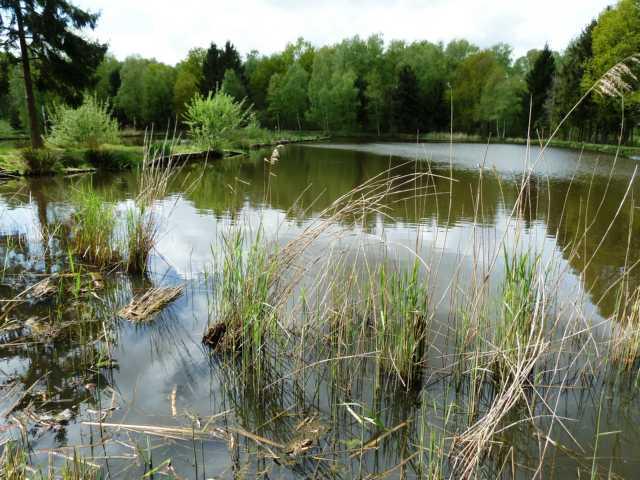 war der Weg (das Wasser) frei für typische Flora der Flachwasserbereiche