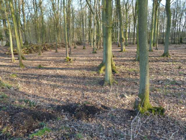 nachdem das Unterholz wurde entfernt worden war, kann man die Umrisse dieser Senke erkennen