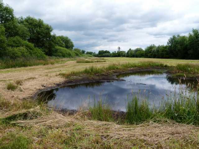 um eben Faune und Flora Lebensraum zu bieten, die an wewchselfeuchtes Milieu angepasst sind;