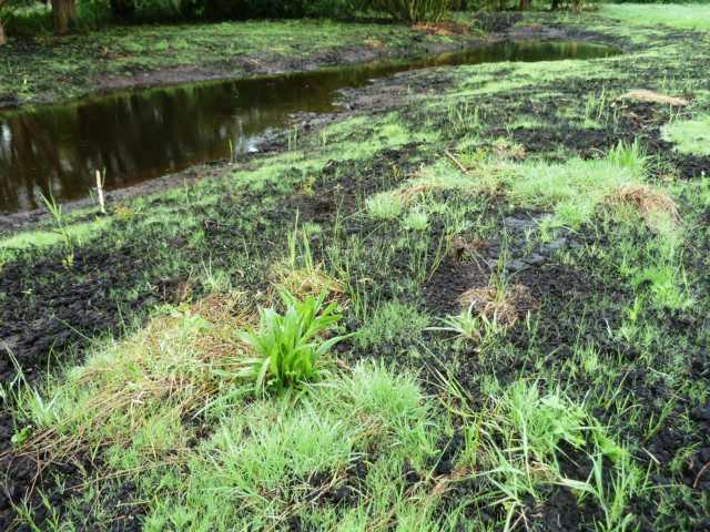 """nach knapp 3 Wochen sind die Ufer der neuen Blänken schon wieder """"grün"""""""