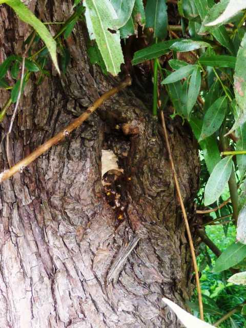 nicht für jeden wirklich staunenswert, ein nest einer der größten einheimischen Insekten