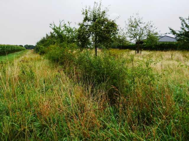 der bestehende Drahtzaun wurde als erstes entfernt, durch eine Hecke aus bienen- und vogelfreundlichem Gehölz ersetzt
