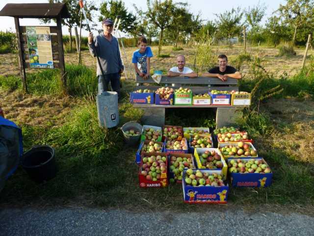 ... immerhin 20 Kartons lupenreiner Aäpfel für die Saftpressaktion bei den Gangelter Einnrichtungen