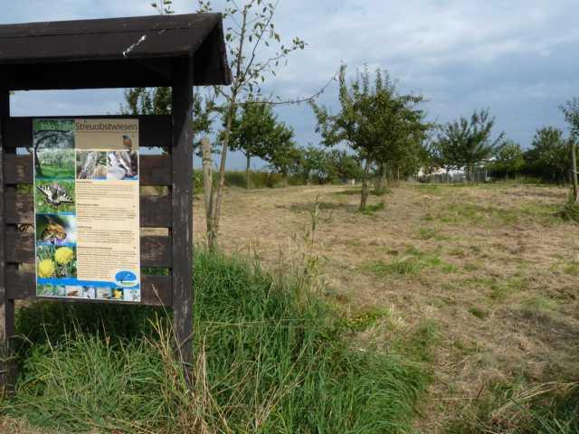 besser konnte es nicht abgesprocghen und geplant sein: Der Technische Dienst der gemeinde hatte Tage zuvor unsere Streuobstwiese gemäht, kein Waten mehr durch hüfthoses Gras