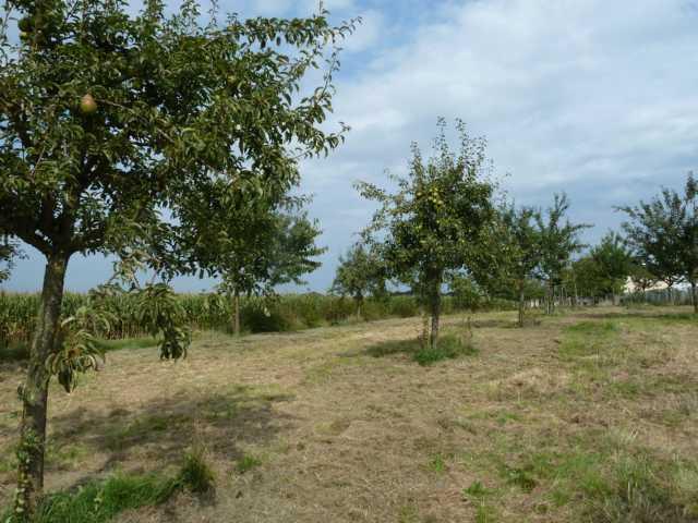 eine Birnenversaftung könnte also noch folgen sehr interessant nebenbei, dass wg. des Säureanteils, der Birnenanteil etwa nur 35%, der Apfelanteil dagegen 65% betragen soll)