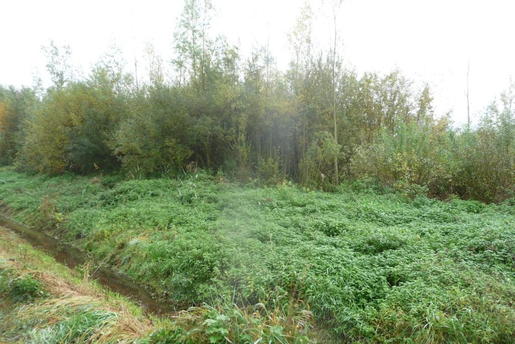 grüne Wand 3