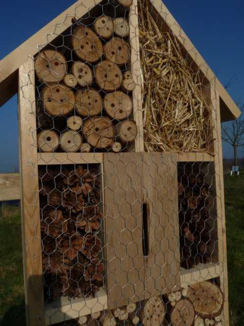 Dieses Verhalten bezeichnet man als Brutfürsorge; die später schlüpfende Larve kann sich dann von dem angesammelten Proviant ernähren und entwickelt sich sich weiter zur ausgewachsenen Biene.
