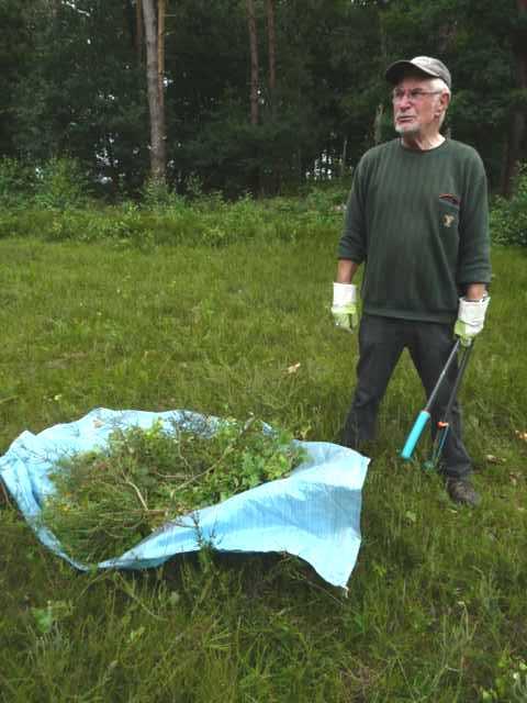 beim Entkusseln werden werden per Hand, Sägen, Ast- und Handschern aufkommende Pionierbaum arten enrfernt werden