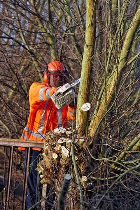 das H Weidenholz ist relativ weich, kann also schnell brechen, erst recht wenn die Äst eine bestimmte Dicke und Höhe erreicht haben, reicht  eine Windböe, sie  auseinanderbrechen zu lassen