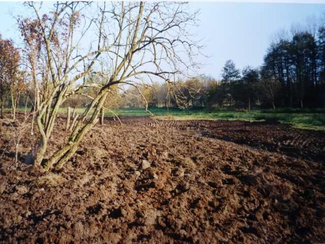 """Reanturierung ghistorischer Rodebachverlauf Akt 4: im Jahr 2000 konnten wir einen weiteren Abschnitt  renaturieren - endlich hat der """"Forst"""" eingesehen, dass auch ein solches """"feuchtes Kleinod als Ausgleichsmaßnahme anerkkennnswert ist!"""