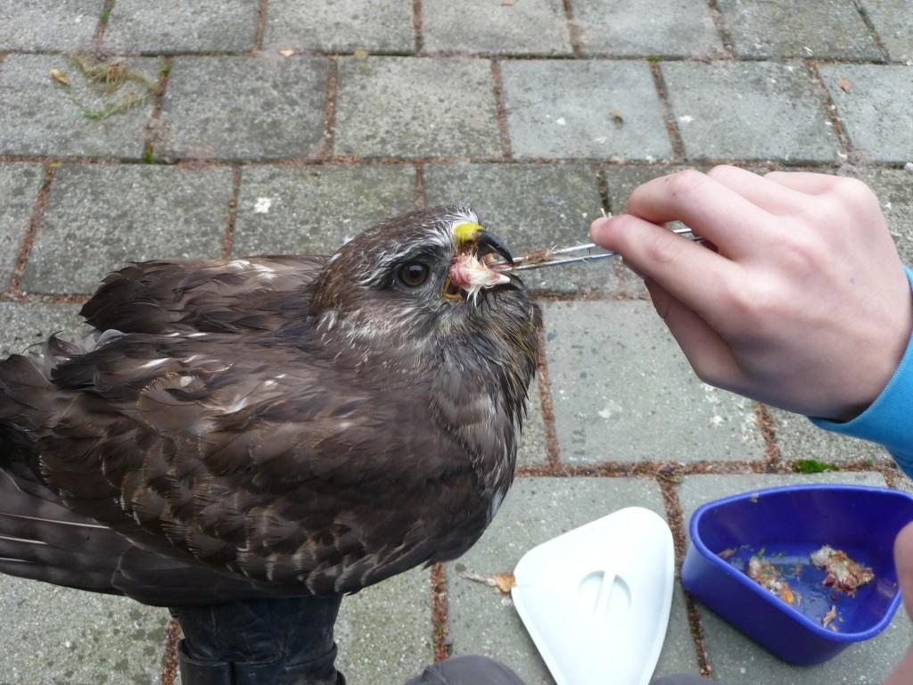 """bei der Arbeit mit """"Patienten"""" in der Eulen- und Greifvogel- bzw. Singvogelpflegestation"""
