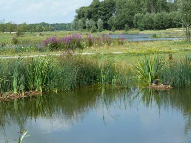 Durchfluss durch den neu angelegten visvijvetr bei Schinveld