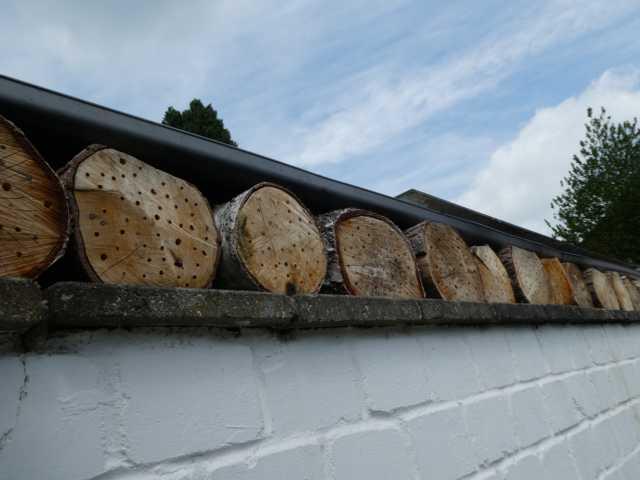 """""""vergrautes"""" Holz mit Bohrungen verschiedener Durchmeasser können auch hier wieder teklweisen Ersatz, geeighnete Wohnstätten bieten!"""