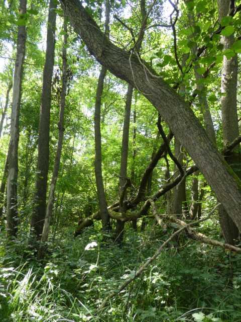 natürlich äußerst schade, aber Zeil war und ist, den neuen Bachlauf auch durch diese Waldstück zu bringen