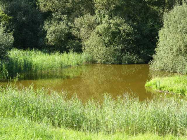 Schilf in unmittelbarer Wasser-/Ufernähe für freieSicht nicht förderlich
