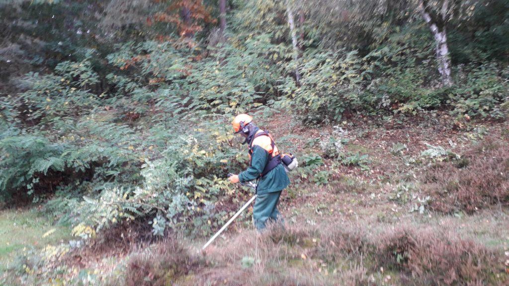 Mit dem Freischneider wurden Brombeeren, Kiefern und Birken entfernt