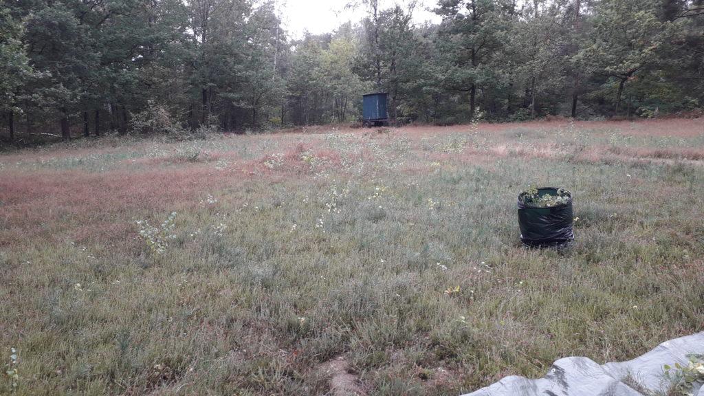 mit Körben wurden die Pflanzen gesammelt, um danach aus der Heide gebracht zu werden.