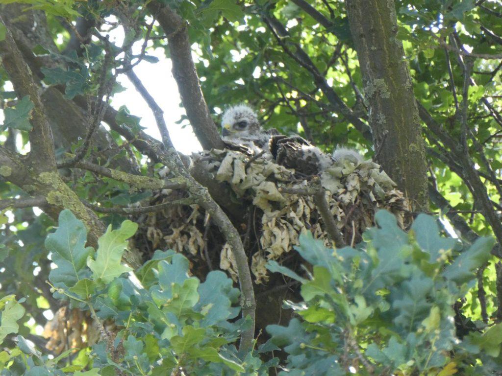 Wenn man genau hinschaut erkennt man das Nest...