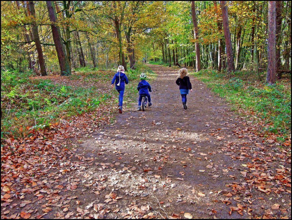 rodebach-natur-und-landschaftspark-15-11-2020